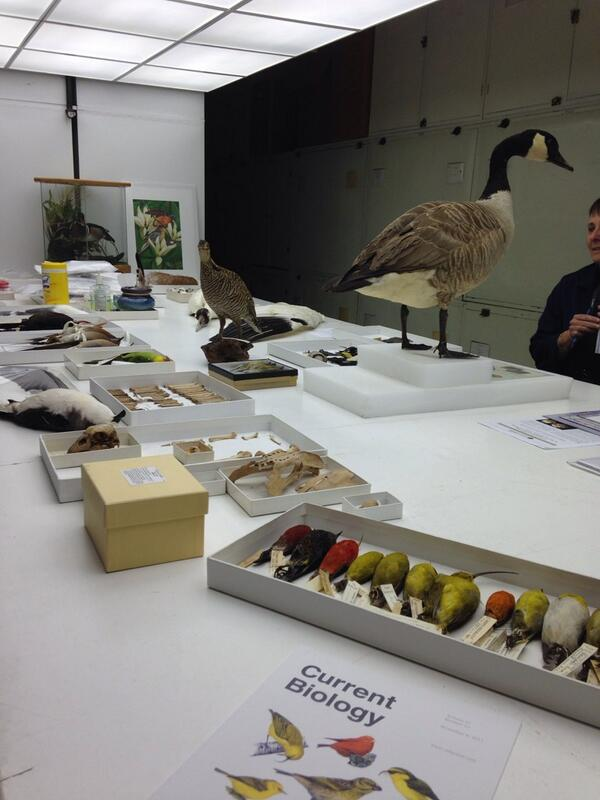Thumbnail for Bird collection behind the scenes tour