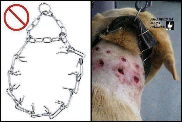 This pisses me off so much RT @TheMindBlowing:Please keep retweeting this so we can get these horrible collars banned http://t.co/fS6jWpiuEY