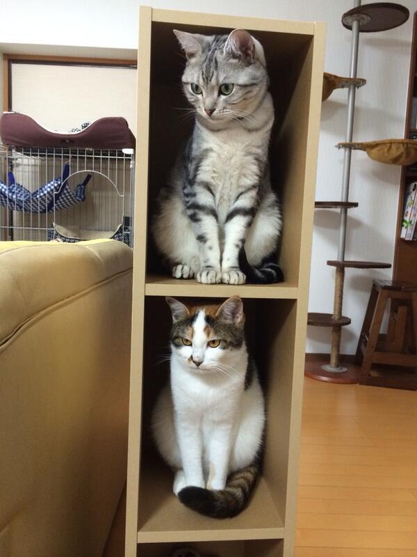 断捨離したら無印のBOXが空いたので、猫マンションになってる pic.twitter.com/mYWeYt5FM0