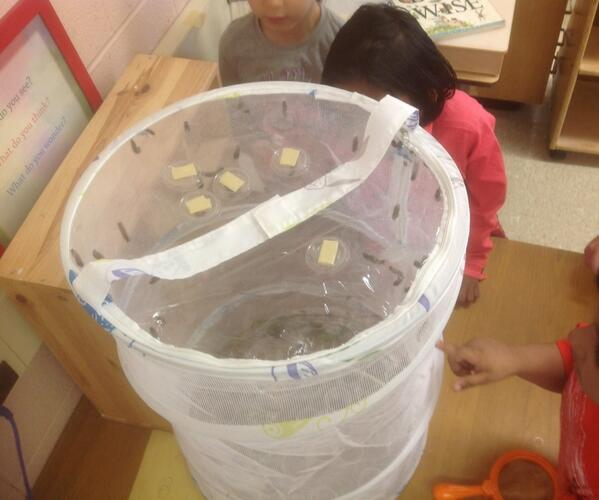 N says: Dear @RangerRidley we have chrysalis turning into a raccoon and then a butterfly! #inquiry http://t.co/Wu1hhOJQ0z