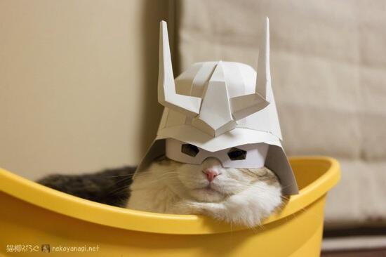 [更新]猫柳ぶろぐ:ニャア大佐 bit.ly/1fJFoHe #cat #neko #猫柳 pic.twitter.com/eufyQEyxFW