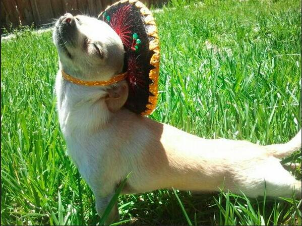 Happy Cinco de Mayo! Enjoy the day! http://t.co/NzqKs81sua