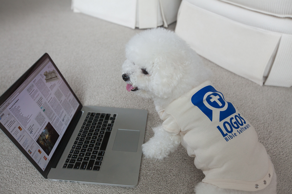 "Turns out @Logos is so easy, all you need is ""paws""... http://t.co/s8Rgnh4UgF"