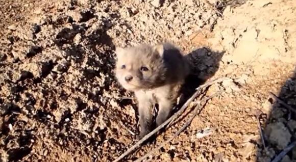カラパイア : 「出会いと別れ」 傷ついてボロボロになっていたキツネの子を保護して野生に帰すまでの記録映像