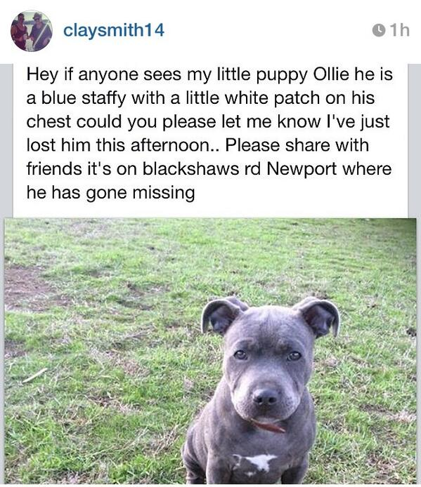 We just put the call out to help @westernbulldogs Clay Smith find his puppy Ollie. Keep an eye out for him in Newport http://t.co/u7v10gLqQ2