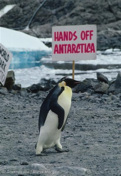 Happy World #PenguinDay. This little guy won his campaign to keep oil out of Antarctica. Let's #SaveTheArctic too. http://t.co/gWXUrbT5es