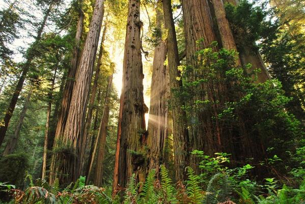 Department of Interior:  Let's end #ArborDay with this great shot from Redwood National Park in #California. pic.twitter.com/SzlkQASYFI