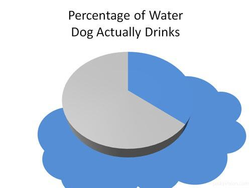 Eric Alper On Twitter Pie Chart Percentage Of Water Dog Actually