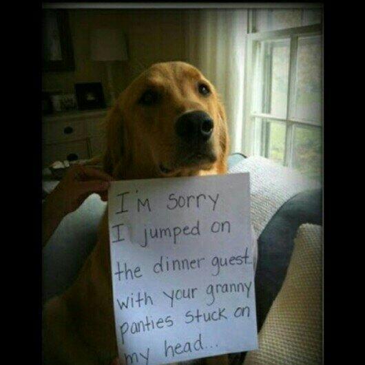 haha funny dogs hahafunnydogs twitter