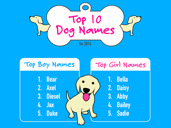 Kyle Larson On Twitter Quot Gizmo Is The Top Geeky Dog Name