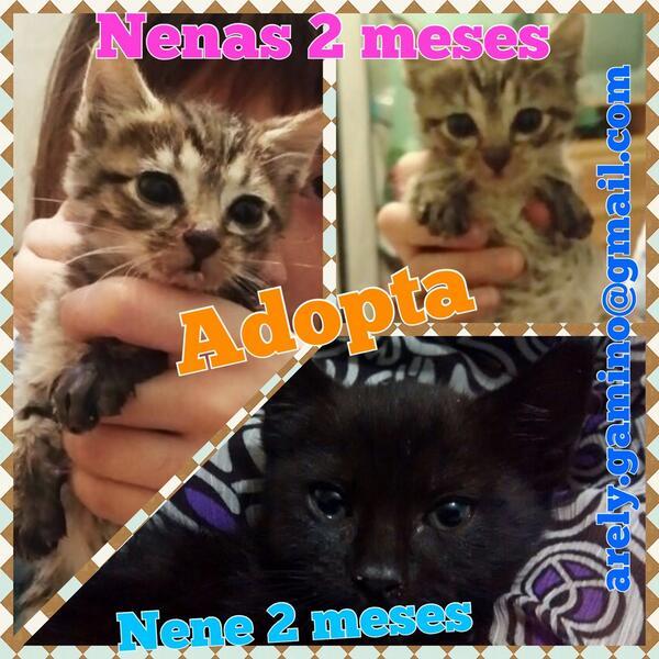 Gracias por RT de mis nuevos rescataditos #gatitos #adopción @En_laDelValle @LaRomaDF @LetyVarela sociables y sanos http://t.co/PKXwNuMOMa