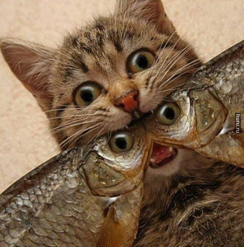 Жене марта, картинка рыба прикол