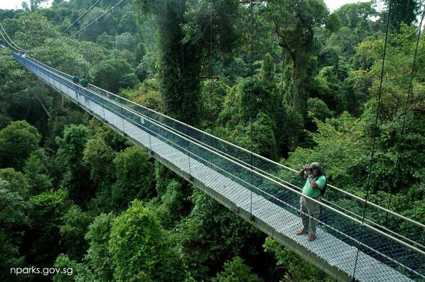 Escape the city & surround yrself w/ greenery at the Tree Top Walk in MacRitchie! Buses 167, 855 & 980 bring you thr. http://t.co/Z7HjSPVBoD