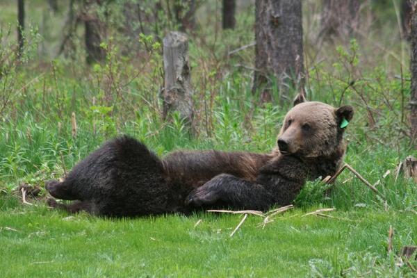 Bear sexy photos