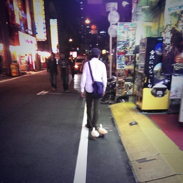 アヒルと散歩してる人がいた… 片方はリードなしで普通に後をついてきてて、悶絶 http://t.co/CLbbDX3bbE