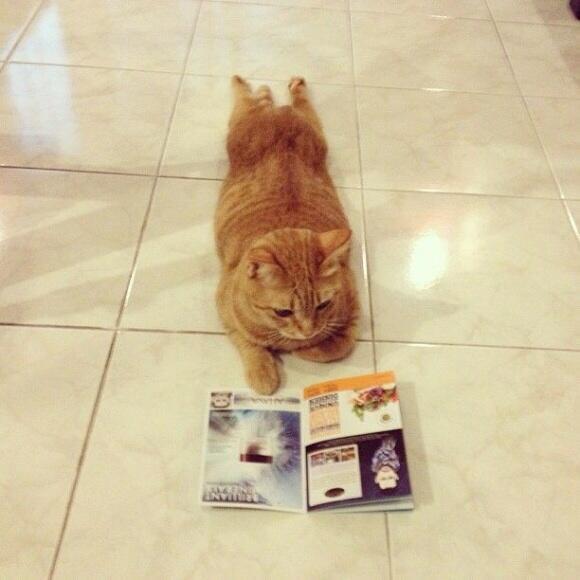 置いていくつもりの飼い猫がついて行く気マンマンで家族旅行のパンフレットを読んでいる。どうしたものか。 pic.twitter.com/VvWXNq3xSl