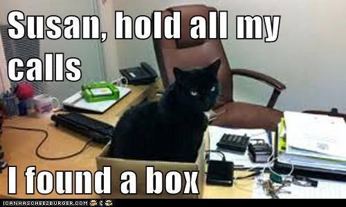 Image result for ANIMAL OFFICE  MEMES