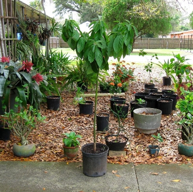 Recycle Avocado Seeds and Grow Luxurious Trees http://t.co/MuKEU3PsVy @RecyclerNetwork for more ideas #recycle #trees http://t.co/3hDL4FMDWK