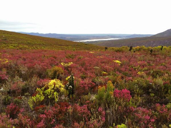 The fynbos floral kingdom in @Grootbos nature reserve. Just breathtaking. #visitoverberg #stellenblog http://t.co/BXQYPEFGnO