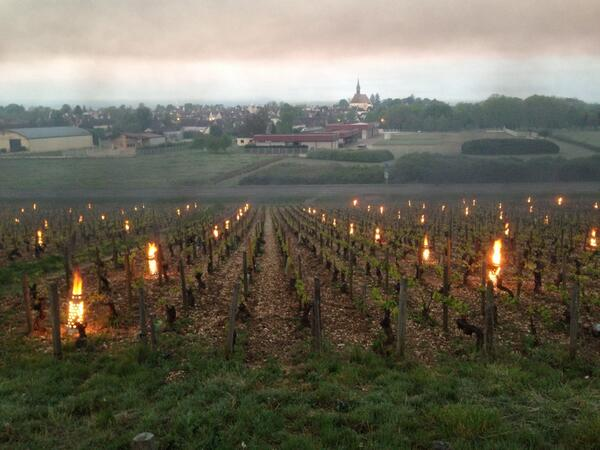 Top #wine pic >>> @ChristianMoreau >>>  ...Chablis Grand Cru les Clos early morning !! http://t.co/OfNt1FVwN3
