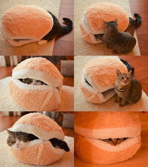 猫マカロン pic.twitter.com/fqKQY3OxrM