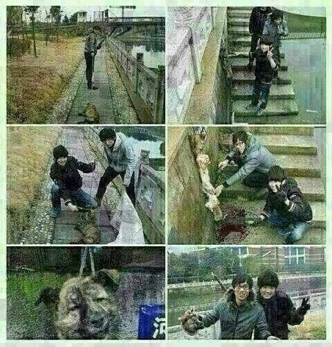 この人たちは犬を殺し、 糸にくくりつけ、棒に付けて、 写真 を撮っています。 ―――――― 逮捕されなくても良いので同じ目に遭いこの社会から消えてなくなりますように http://t.co/RJb0Ho0rZL