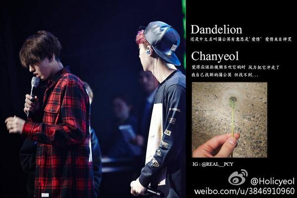 "Dandelion = หรือว่าชื่อจีน 蒲公英 มีความหมายว่า ""ความรัก"" http://t.co/24TCF8p1hK"