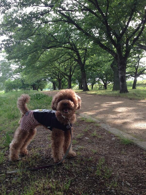お散歩。木陰が気持ち良い季節になった。(^^) http://t.co/6rwWuB9PpU