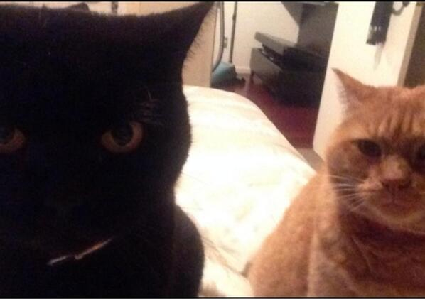 For every hero cat that saves a kid there are two villain cats planing to kill their owner http://t.co/9XwL816H2C