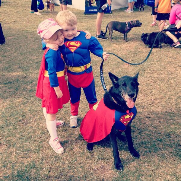 Super Chelsea and Super Flynn flew in for #millionpawswalk with trusty sidekick Monty #RSPCAMPW #mpw2014 http://t.co/82yuIqhWPC
