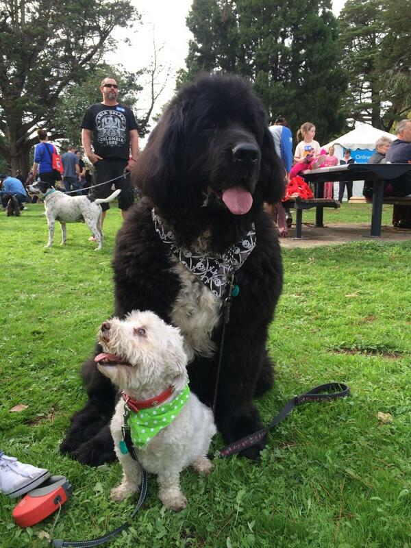 """@Geelong_Mayor: Loved meeting so many amazing dogs today! #MillionPawsWalk @DarrynLyons http://t.co/nYRC8LBGGV"" #livelovegeelong"