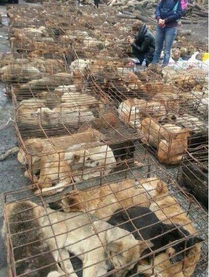 @DogRescueTweets:#DogMeatTrade YES People really do eat #dogs #cats #puppies #kittens @saynotodogmeat @stopeatingcats http://t.co/X1ZQj9vYs9