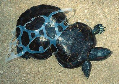 Image result for plastics and seabirds