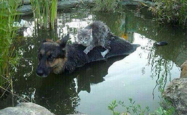 Очень сильная фотография из Боснии, переживающей сейчас мощное наводнение. http://t.co/Z5QP8oqBpT
