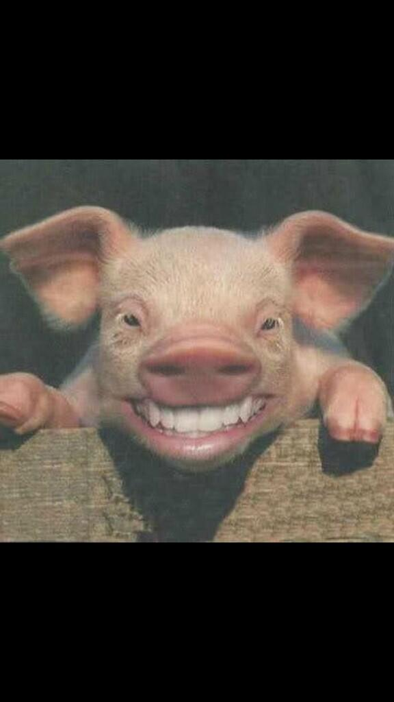 Animals Human Teeth On Twitter You Have To Admit Animals With Human Teeth Are So Funny Http T Co Vjd4qfuxjw