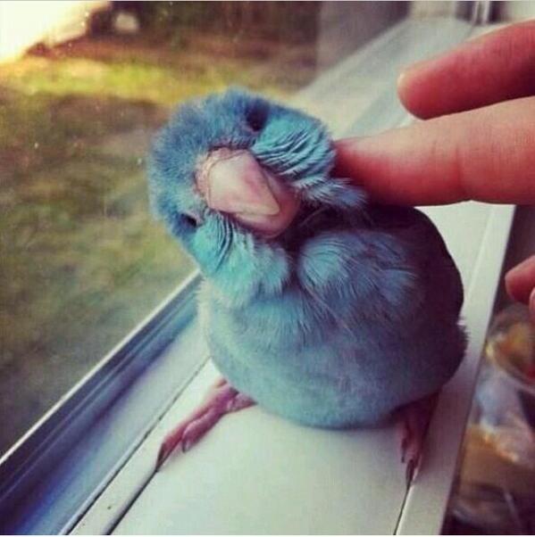 Twitter, ¿eres tu? http://t.co/U7SPPt9a3V