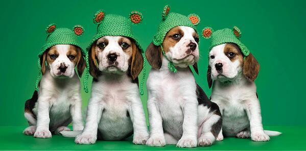 Image result for lloyds bank beagle