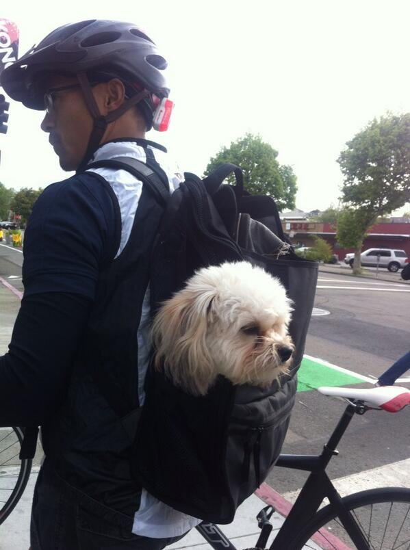 Canine luggage on Telegraph during #bike2berk http://t.co/6Srox4O7ju