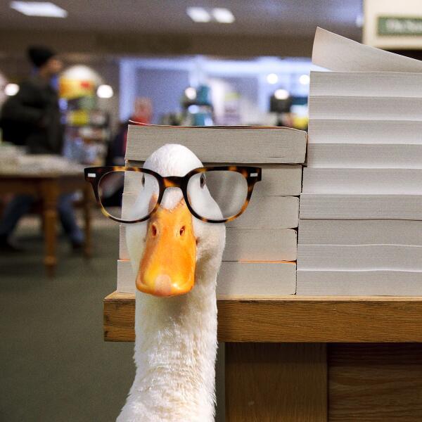 "Aflac Duck on Twitter: ""Do black-rimmed glasses suit me? # ... | 600 x 600 jpeg 46kB"