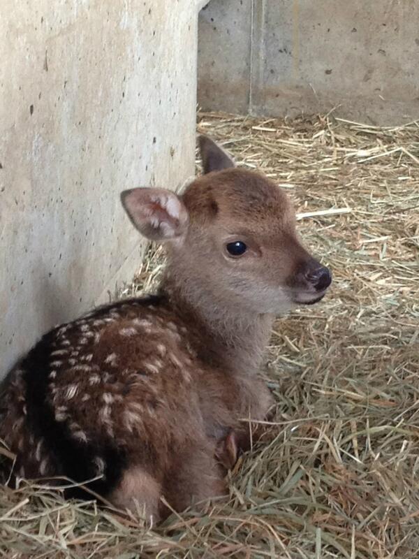 鹿児島市平川動物公園 on Twitte...