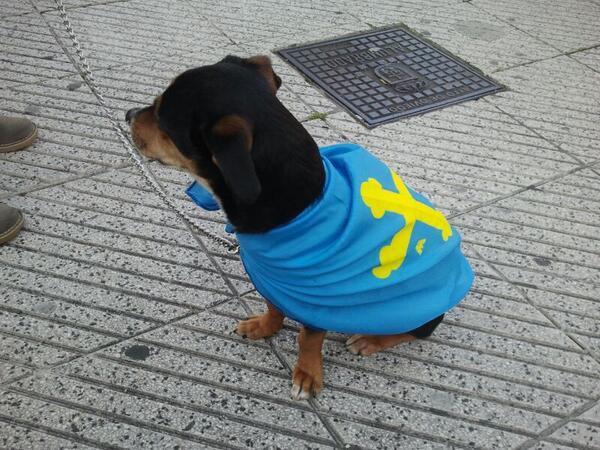 Y la Xana perra #canaria yá ta oficialmente nacionalizada #asturiana #Oficialida http://t.co/Vi9YC66Dzc