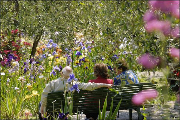 The Iris Garden is one of the best-kept secrets of #Florence and it's open only in Spring: http://t.co/oQCg7F5Sou http://t.co/PCORIWaySi