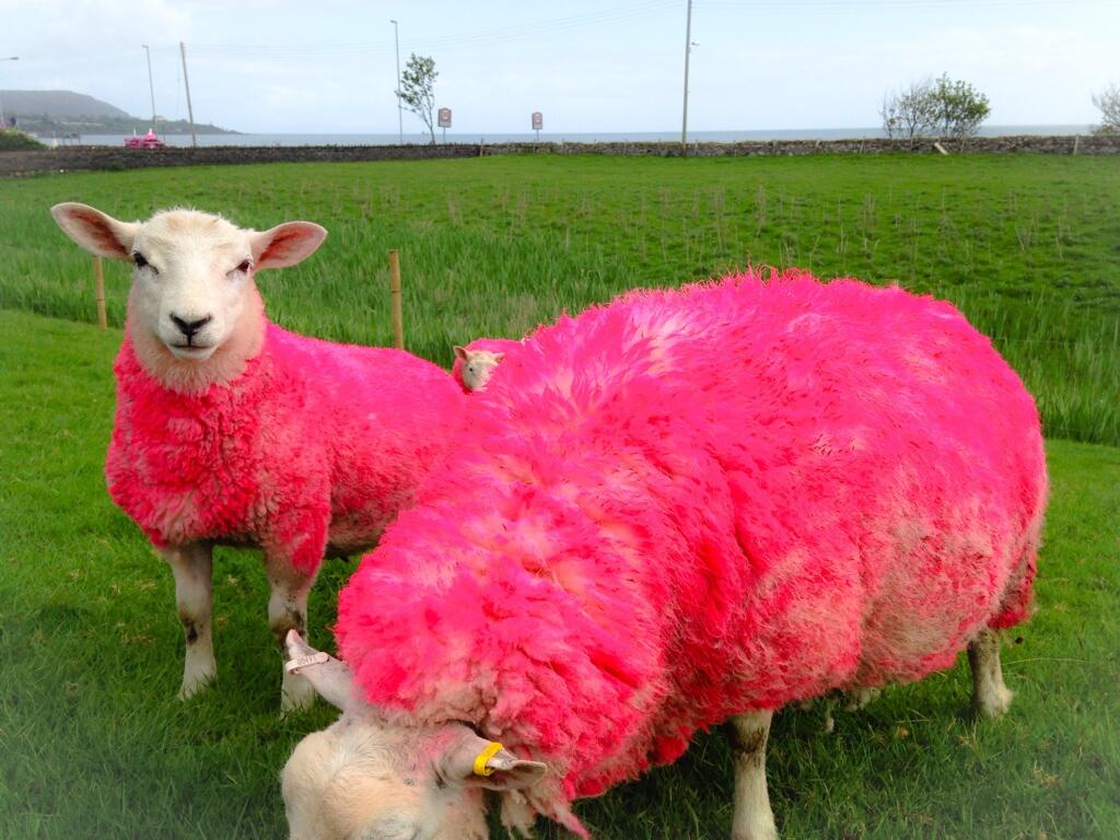 Giro d'Italia 2014 (Fight For Pink) - Página 5 BnRDtNdCEAIijvU