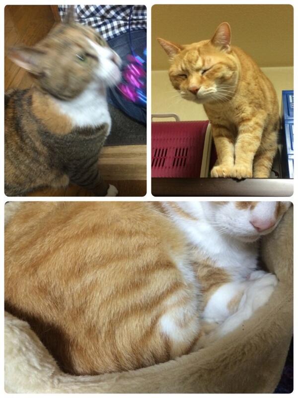 (・ω・) <猫三匹と戯れる夜。触り心地最高じゃ〜!ふぉ。 http://t.co/SgFlKiVRXT