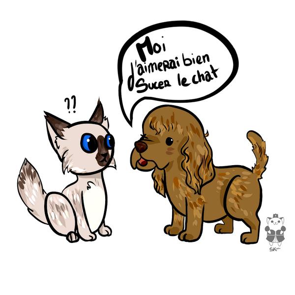 rencontre entre chaton et chien La Roche-sur-Yon