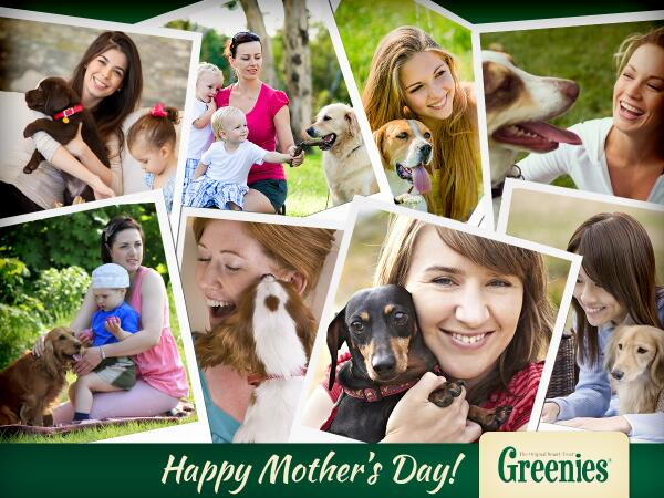 Kisses from your kids with paws. (And fresh breath courtesy of GREENIES® treats.) Happy Mother's Day! http://t.co/TJqUMldrLX