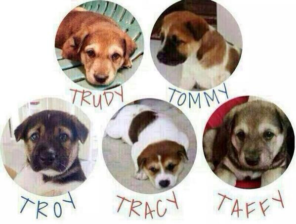 anyone able to adopt them(abt 3 mths old)?! otherwise,they will be put to slp..