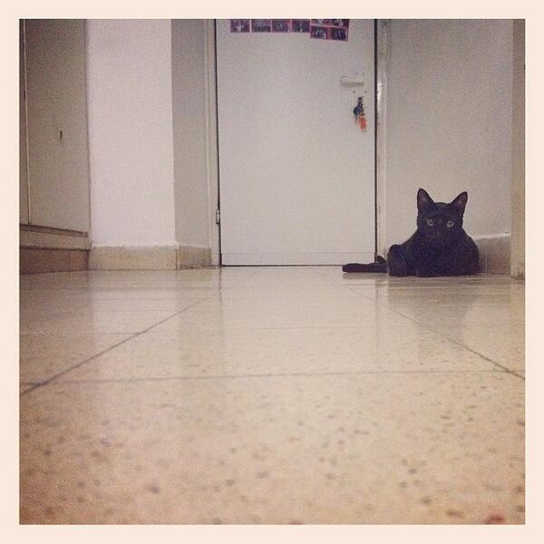#black #cat #face #love #animals #pet #floor #door #home http://t.co/TEPmAUNxXD