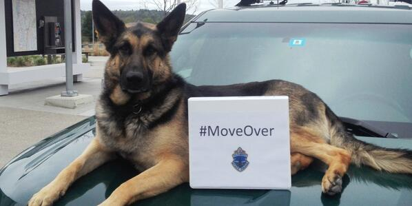 #k9 Tarawa wants to stay safe when he's working!  Join the @THP_Colonel & @TheIACP and share your #MoveOver photos! http://t.co/x8tNqMbx89