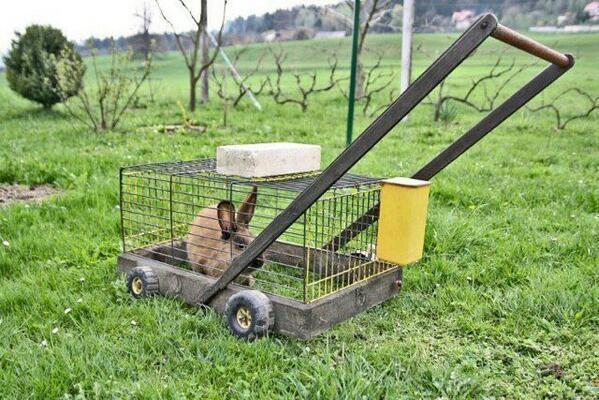 Een grasmaaier op konijnenenergie